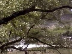 sex below the tree